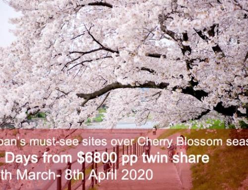 Classic Cherry Blossom Tour 2020