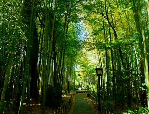 Shin-Etsu Trail Trekking