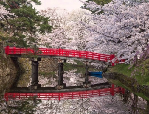 World Heritage & Kumano Kodo Cherry Blossom Tour 2019