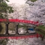 World Heritage & Kumano Kodo Cherry Blossom Tour