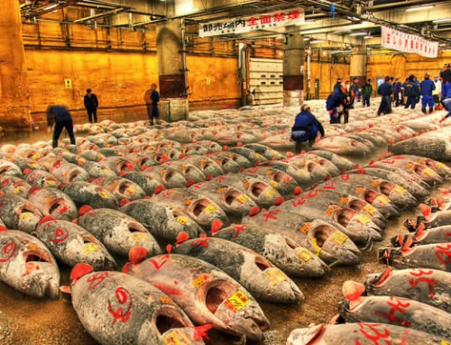 Tsukiji Fish Market relocation
