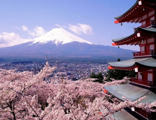 Where to go for the best Cherry Blossoms