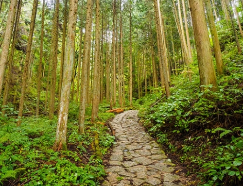 Nakasendo Trail | self-guided walking | 3 days
