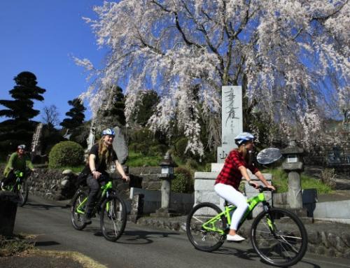 Mt Fuji & Sakura 2 Day EcoTour