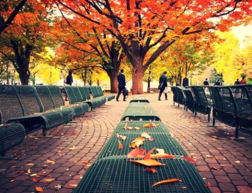 South Hokkaido Autumn Leaves | 7 Days Self Drive