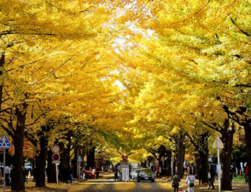 Southern Hokkaido Autumn Leaves | 7 Days Self Drive