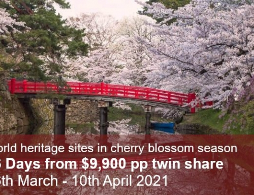 World Heritage & Kumano Kodo Cherry Blossom Tour 2021