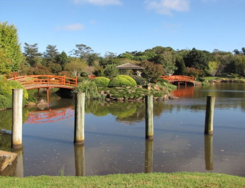 Join Japan Holidays this September at the Toowoomba Carnival of Flowers