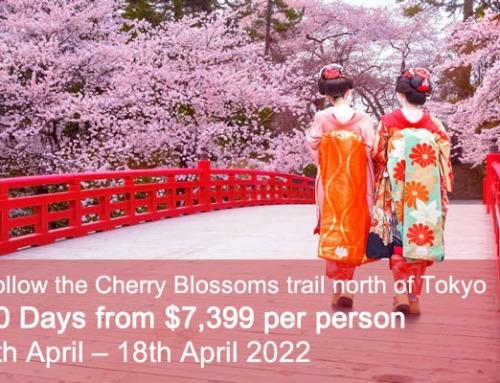 Samurai and Sakura Cherry Blossom Tour 2022