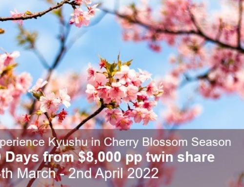 Cherry Blossom Trail & Last Samurai Tour of Kyushu 2022