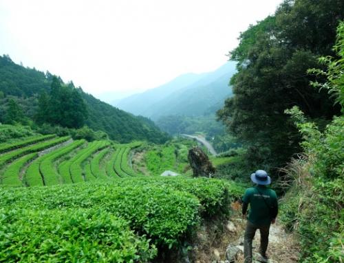 Walking the Henro Pilgrimage Kochi Shikoku